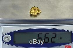 #1113 Large Natural Gold Nugget Australian 6.62 Grams Genuine