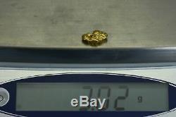 #328 Alaskan-Yukon BC Natural Gold Nugget 3.02 Grams Genuine