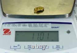 #413B Alaskan BC Natural Gold Nugget 11.01 Grams Genuine