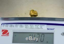 #490 Alaskan BC Natural Gold Nugget 14.20 Grams Genuine