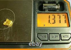 Alaskan Natural Placer Gold Nugget 1.377 grams Free Shipping! #A865