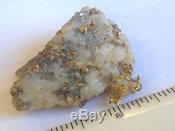 California Gold Bearing Quartz Specimen Natural Gold Nuggets Gold