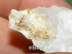 California Gold Quartz Specimen Natural Gold Nugget 16.7 Gram Gold In Quartz