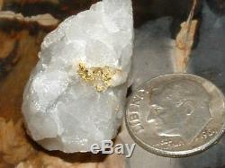 Crystalline Gold Quartz Specimen Natural Gold Nugget 12.4 Gram Gold In Quartz