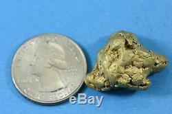 Large Alaskan BC Natural Gold Nugget 30.19 Grams Genuine