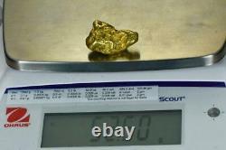 Large Alaskan BC Natural Gold Nugget 52.50 Grams Genuine 1.68 Troy Ounces-B